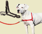 easy walker dog harness
