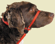 gentle leader head collar
